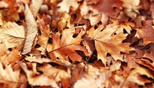 土地選びの失敗。選んだ季節が悪かった?気づかなかった落ち葉問題